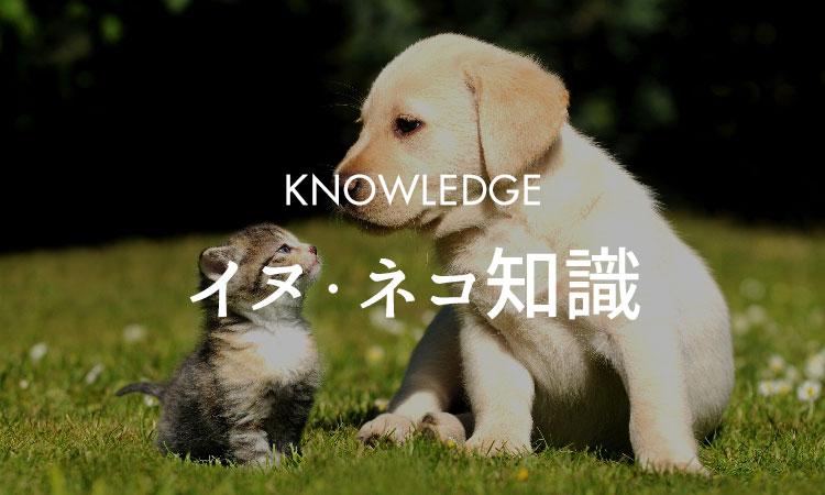 犬・猫知識